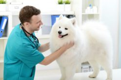 All You Need To Know About Pet Insurance