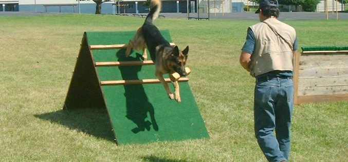 Tips & Tricks for Training Stubborn Dogs